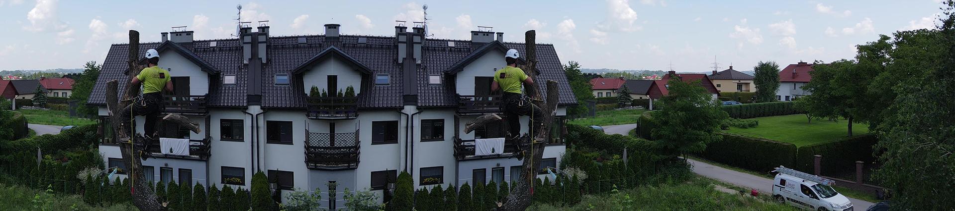 człowiek ścina drzewo